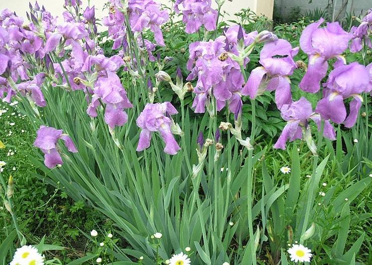 Цветы в саду модерн